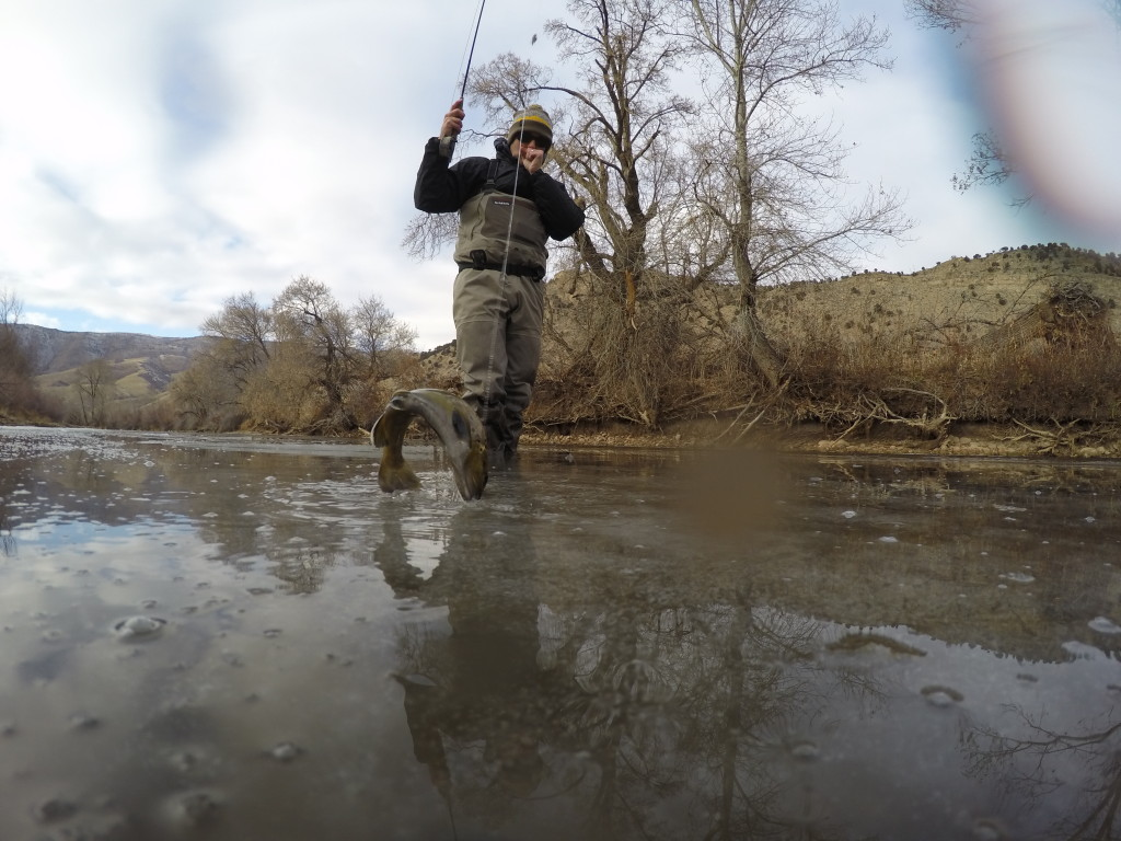 November 2015 801 fly fishing for Weber river fishing report