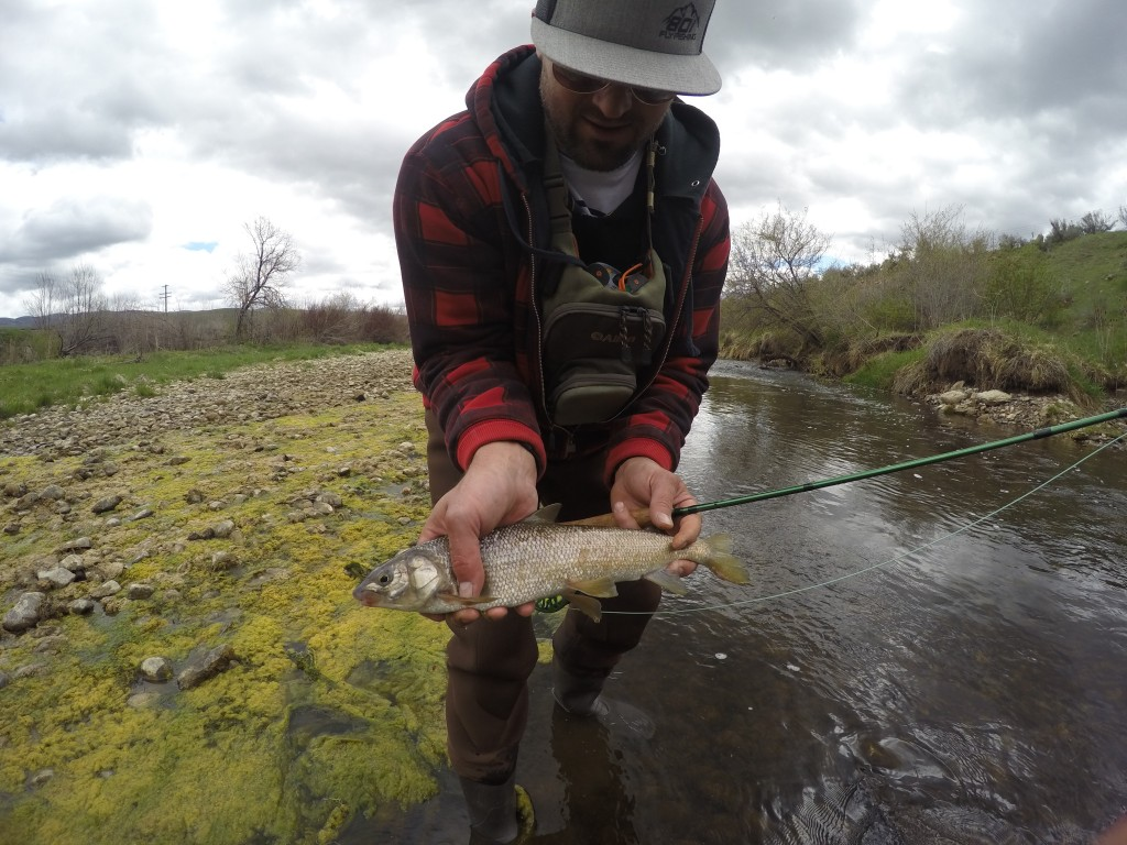 Jason 801 fly fishing for Weber river fishing report