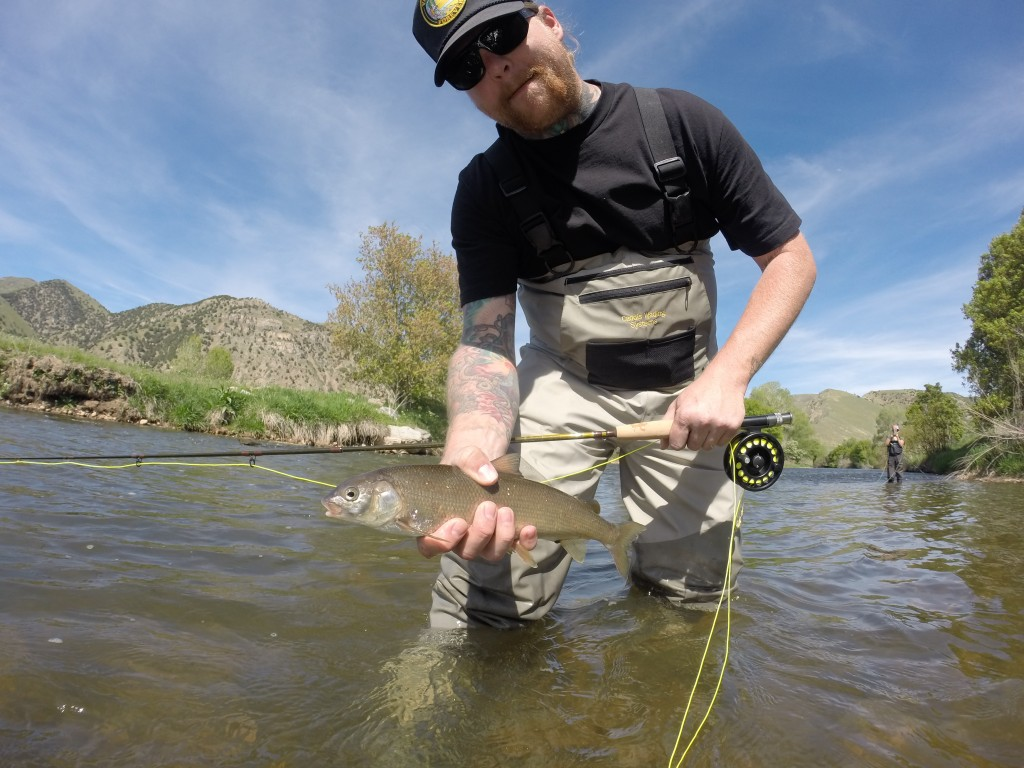 Alex and christina 801 fly fishing for Weber river fishing report