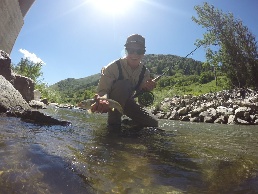 Lane 801 fly fishing for Weber river fishing report